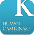 Browse human CaM kinases